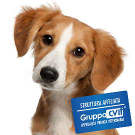 ambulatorio veterinario CVIT torino